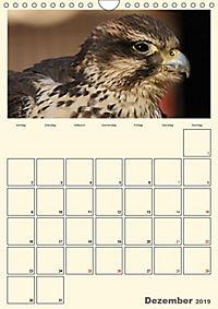 Raubvögel (Wandkalender 2019 DIN A4 hoch) - Produktdetailbild 12