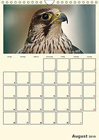 Raubvögel (Wandkalender 2019 DIN A4 hoch) - Produktdetailbild 8