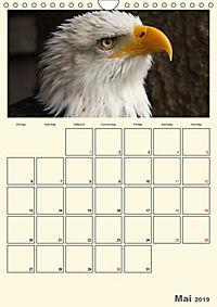 Raubvögel (Wandkalender 2019 DIN A4 hoch) - Produktdetailbild 5