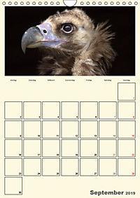 Raubvögel (Wandkalender 2019 DIN A4 hoch) - Produktdetailbild 9