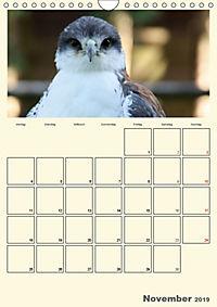 Raubvögel (Wandkalender 2019 DIN A4 hoch) - Produktdetailbild 11