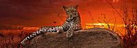 Red Dawn Panoramapuzzle, 2.000 Teile - Produktdetailbild 2