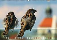 Regensburger Altstadtspatzen (Wandkalender 2019 DIN A2 quer) - Produktdetailbild 4