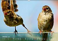 Regensburger Altstadtspatzen (Wandkalender 2019 DIN A2 quer) - Produktdetailbild 10