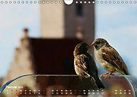Regensburger Altstadtspatzen (Wandkalender 2019 DIN A4 quer) - Produktdetailbild 2