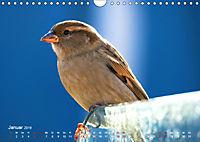 Regensburger Altstadtspatzen (Wandkalender 2019 DIN A4 quer) - Produktdetailbild 1