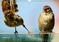 Regensburger Altstadtspatzen (Wandkalender 2019 DIN A4 quer) - Produktdetailbild 10