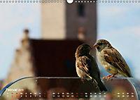 Regensburger Altstadtspatzen (Wandkalender 2019 DIN A3 quer) - Produktdetailbild 2