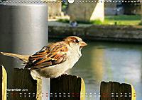 Regensburger Altstadtspatzen (Wandkalender 2019 DIN A3 quer) - Produktdetailbild 11