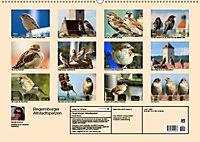 Regensburger Altstadtspatzen (Wandkalender 2019 DIN A2 quer) - Produktdetailbild 13