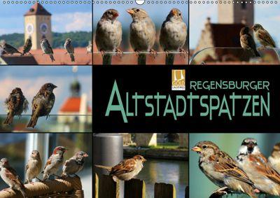 Regensburger Altstadtspatzen (Wandkalender 2019 DIN A2 quer), Renate Bleicher