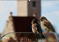 Regensburger Altstadtspatzen (Wandkalender 2019 DIN A2 quer) - Produktdetailbild 2