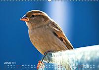 Regensburger Altstadtspatzen (Wandkalender 2019 DIN A2 quer) - Produktdetailbild 1