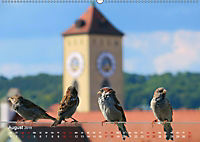Regensburger Altstadtspatzen (Wandkalender 2019 DIN A2 quer) - Produktdetailbild 8