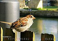 Regensburger Altstadtspatzen (Wandkalender 2019 DIN A2 quer) - Produktdetailbild 11