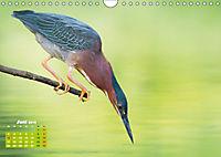 Reiher: Eleganz auf langen Beinen (Wandkalender 2019 DIN A4 quer) - Produktdetailbild 6