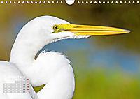 Reiher: Eleganz auf langen Beinen (Wandkalender 2019 DIN A4 quer) - Produktdetailbild 8