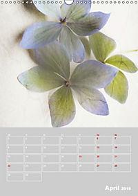 Renaissance der Hortensie (Wandkalender 2019 DIN A3 hoch) - Produktdetailbild 4
