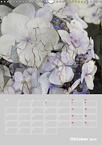 Renaissance der Hortensie (Wandkalender 2019 DIN A3 hoch) - Produktdetailbild 10