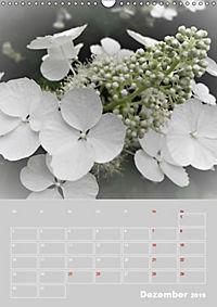 Renaissance der Hortensie (Wandkalender 2019 DIN A3 hoch) - Produktdetailbild 12