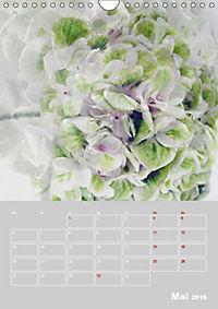 Renaissance der Hortensie (Wandkalender 2019 DIN A4 hoch) - Produktdetailbild 5