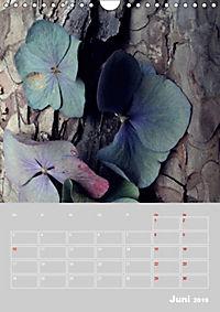 Renaissance der Hortensie (Wandkalender 2019 DIN A4 hoch) - Produktdetailbild 6