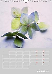 Renaissance der Hortensie (Wandkalender 2019 DIN A4 hoch) - Produktdetailbild 1