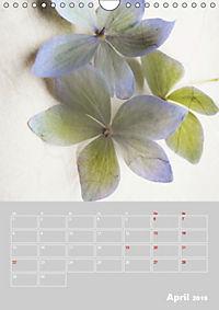 Renaissance der Hortensie (Wandkalender 2019 DIN A4 hoch) - Produktdetailbild 4