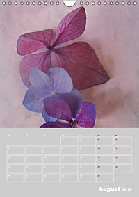Renaissance der Hortensie (Wandkalender 2019 DIN A4 hoch) - Produktdetailbild 8
