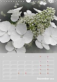 Renaissance der Hortensie (Wandkalender 2019 DIN A4 hoch) - Produktdetailbild 12