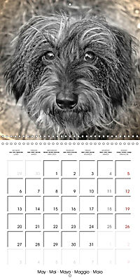 Retro Dogs (Wall Calendar 2019 300 × 300 mm Square) - Produktdetailbild 5