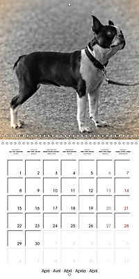 Retro Dogs (Wall Calendar 2019 300 × 300 mm Square) - Produktdetailbild 4