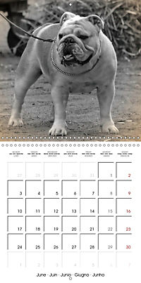 Retro Dogs (Wall Calendar 2019 300 × 300 mm Square) - Produktdetailbild 6