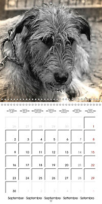 Retro Dogs (Wall Calendar 2019 300 × 300 mm Square) - Produktdetailbild 9