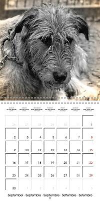 Retro Dogs (Wall Calendar 2019 300 × 300 mm Square) - Produktdetailbild 9