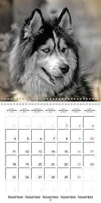Retro Dogs (Wall Calendar 2019 300 × 300 mm Square) - Produktdetailbild 11
