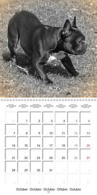 Retro Dogs (Wall Calendar 2019 300 × 300 mm Square) - Produktdetailbild 10