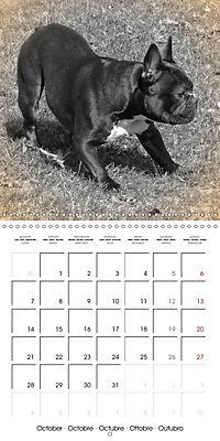 Retro Dogs (Wall Calendar 2019 300 × 300 mm Square) - Produktdetailbild 10