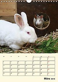 """""""Rex"""" Kaninchen (Wandkalender 2019 DIN A4 hoch) - Produktdetailbild 3"""