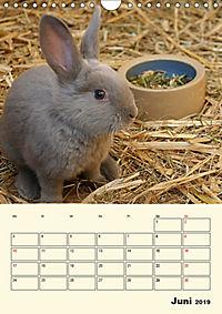 """""""Rex"""" Kaninchen (Wandkalender 2019 DIN A4 hoch) - Produktdetailbild 6"""