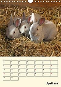 """""""Rex"""" Kaninchen (Wandkalender 2019 DIN A4 hoch) - Produktdetailbild 4"""