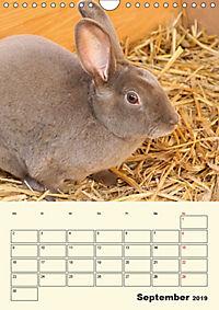 """""""Rex"""" Kaninchen (Wandkalender 2019 DIN A4 hoch) - Produktdetailbild 9"""