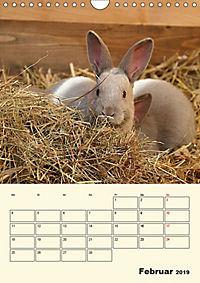 """""""Rex"""" Kaninchen (Wandkalender 2019 DIN A4 hoch) - Produktdetailbild 2"""