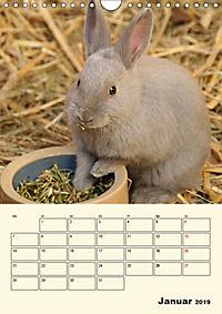 """""""Rex"""" Kaninchen (Wandkalender 2019 DIN A4 hoch) - Produktdetailbild 1"""