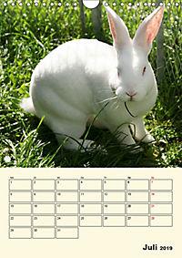 """""""Rex"""" Kaninchen (Wandkalender 2019 DIN A4 hoch) - Produktdetailbild 7"""