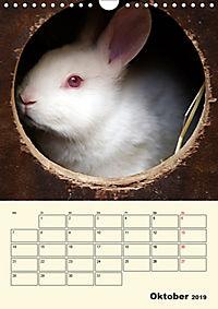 """""""Rex"""" Kaninchen (Wandkalender 2019 DIN A4 hoch) - Produktdetailbild 10"""