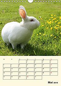 """""""Rex"""" Kaninchen (Wandkalender 2019 DIN A4 hoch) - Produktdetailbild 5"""