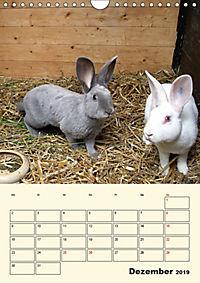"""""""Rex"""" Kaninchen (Wandkalender 2019 DIN A4 hoch) - Produktdetailbild 12"""