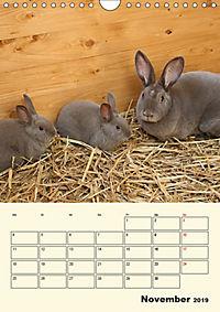 """""""Rex"""" Kaninchen (Wandkalender 2019 DIN A4 hoch) - Produktdetailbild 11"""
