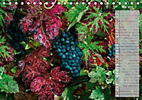 Rheingau - Spätburgunder Trauben (Tischkalender 2019 DIN A5 quer) - Produktdetailbild 5